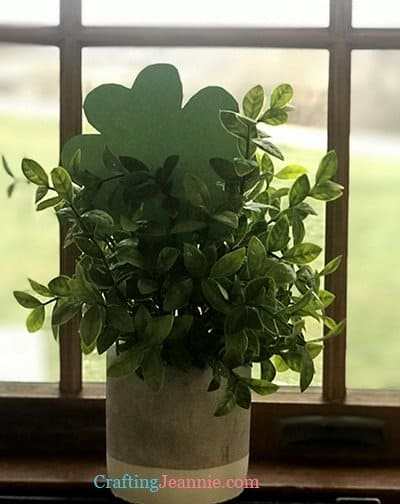 paper clover hiding in plant